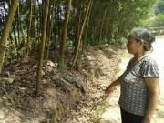 An ninh Xã hội - Mẹ vứt xác con ở bụi rậm có biểu hiện tâm thần