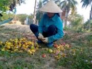 Thị trường - Tiêu dùng - Doanh nghiệp Việt tự triệt nhau