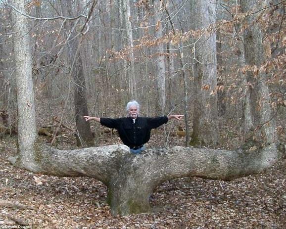 Giải mã hàng loạt cây lớn oằn 90 độ bí ẩn trong rừng Mỹ - 4
