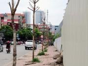 """Tin tức trong ngày - Hai tuyến phố """"trồng 20 cây xanh sống 1"""" ở Thủ đô"""