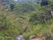 An ninh Xã hội - Vây ráp bắt kẻ giết nữ sinh đang trốn trong rừng
