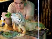 """Thị trường - Tiêu dùng - Rồng Nam Mỹ - """"Cơn sốt"""" thú cưng của giới trẻ Việt"""