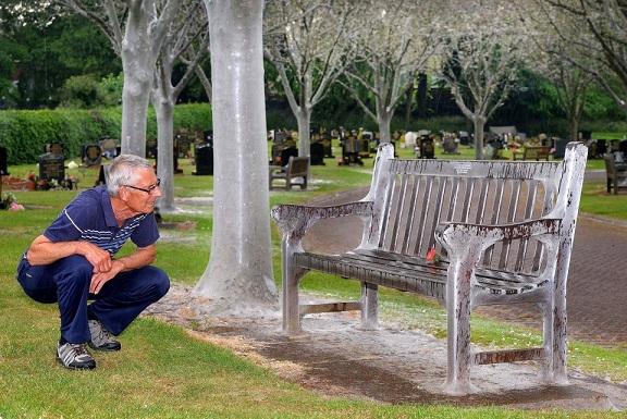 Anh: Hàng nghìn sâu bướm phủ trắng cây cối nghĩa trang - 1