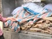 """Thị trường - Tiêu dùng - Rùng mình 1,6 tấn trâu bò hôi thối """"chạy"""" về Hà Nội"""
