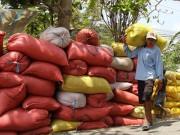 Thị trường - Tiêu dùng - Trung Quốc sang tận ruộng kiểm tra gạo Việt
