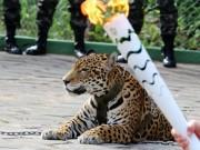 """Thế giới - Brazil: Báo gấm """"rước đuốc"""" Olympic bất ngờ bị bắn chết"""