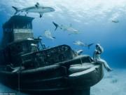 Du lịch - Người đẹp mạo hiểm một mình lặn giữa bầy cá mập