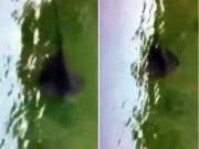 Phi thường - kỳ quặc - Sinh vật bí ẩn dưới nước gây hoang mang ở Italia