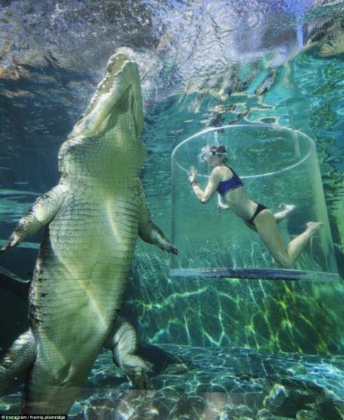 Cô gái xinh đẹp lặn cùng cá sấu khổng lồ dài 5m - 1