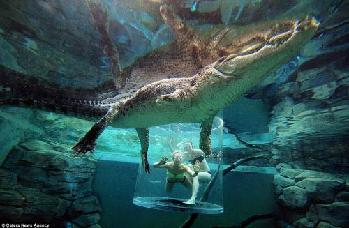 Cô gái xinh đẹp lặn cùng cá sấu khổng lồ dài 5m - 2