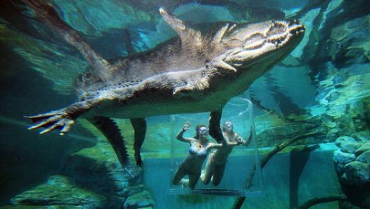 Cô gái xinh đẹp lặn cùng cá sấu khổng lồ dài 5m