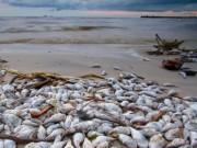 Tin tức trong ngày - Thủ tướng: Tăng thời gian hỗ trợ ngư dân vùng cá chết