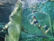 Phi thường - kỳ quặc - Cô gái xinh đẹp lặn cùng cá sấu khổng lồ dài 5m