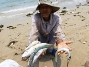 Tin tức trong ngày - Khả năng 29-6 công bố nguyên nhân cá chết tại Miền Trung