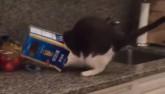 """Video clip: """"Phát điên"""" với chú mèo tai quái"""