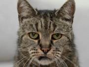 """Thế giới - Cụ mèo già nhất thế giới """"141 tuổi"""""""