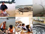Tin tức trong ngày - Toàn cảnh vụ cá chết hàng loạt ở miền Trung
