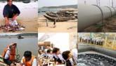 Vụ cá chết: Formosa là thủ phạm, cam kết bồi thường 500 triệu USD