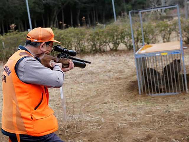 Mỹ: Bé trai 11 tuổi bắn chết gấu dữ để bảo vệ gia đình - 3