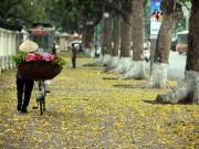 Tin tức trong ngày - Mùa cây thay lá, Hà Nội đẹp mê hồn khiến bao người đắm say