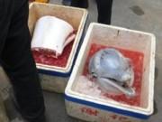 Thế giới - TQ: Cá heo trắng quý hiếm bị xẻ thịt bán ngay trên phố