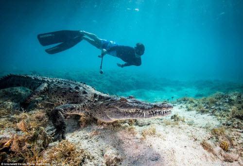 Mỹ: Cậu bé 14 tuổi bơi cùng bầy cá sấu hoang trong rừng - 1