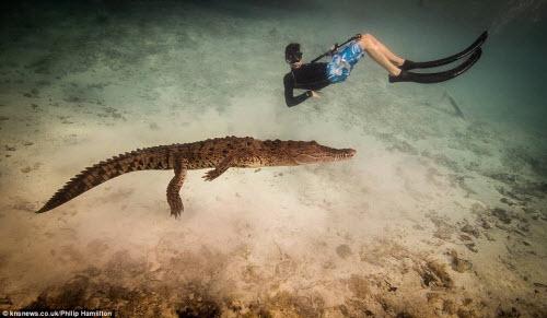Mỹ: Cậu bé 14 tuổi bơi cùng bầy cá sấu hoang trong rừng - 2
