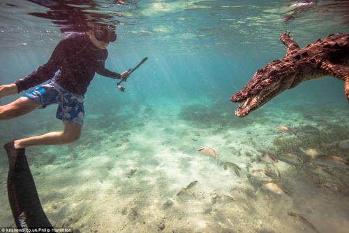 Mỹ: Cậu bé 14 tuổi bơi cùng bầy cá sấu hoang trong rừng - 3