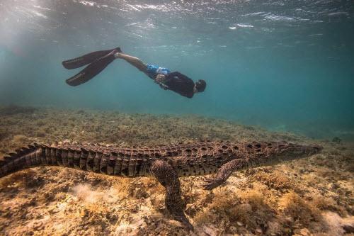 Mỹ: Cậu bé 14 tuổi bơi cùng bầy cá sấu hoang trong rừng - 4