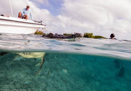 Mỹ: Cậu bé 14 tuổi bơi cùng bầy cá sấu hoang trong rừng - 5