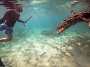 Thế giới - Mỹ: Cậu bé 14 tuổi bơi cùng bầy cá sấu hoang trong rừng