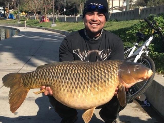 Mỹ: Run rẩy vì câu được cá chép khổng lồ trong công viên