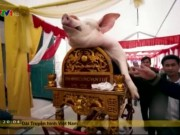 Độc đáo lễ rước lợn ở làng La Phù