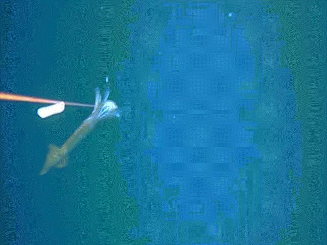 Thấy cảnh đáng sợ khi thả máy quay xuống biển sâu 134m