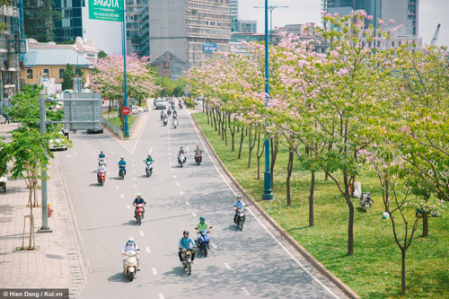 Sài Gòn đâu chỉ có nắng mưa, còn có những mùa hoa đẹp say lòng nữa! - 3