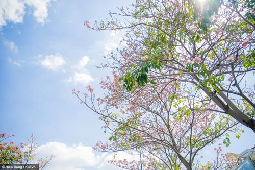 Sài Gòn đâu chỉ có nắng mưa, còn có những mùa hoa đẹp say lòng nữa! - 5