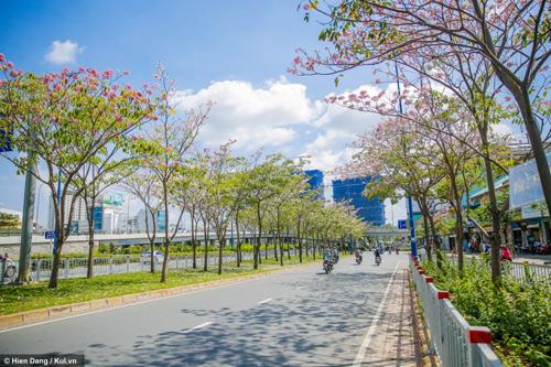 Sài Gòn đâu chỉ có nắng mưa, còn có những mùa hoa đẹp say lòng nữa! - 1