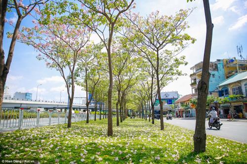 Sài Gòn đâu chỉ có nắng mưa, còn có những mùa hoa đẹp say lòng nữa! - 8
