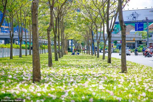 Sài Gòn đâu chỉ có nắng mưa, còn có những mùa hoa đẹp say lòng nữa! - 2