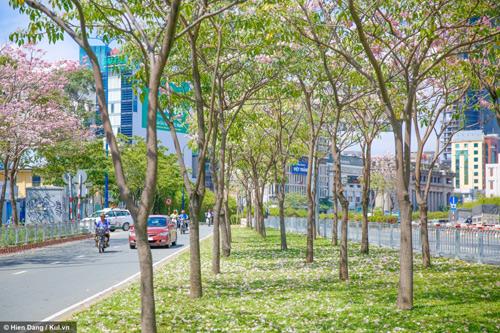 Sài Gòn đâu chỉ có nắng mưa, còn có những mùa hoa đẹp say lòng nữa! - 4
