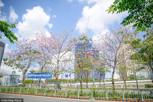 Sài Gòn đâu chỉ có nắng mưa, còn có những mùa hoa đẹp say lòng nữa! - 7