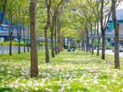 Du lịch - Sài Gòn đâu chỉ có nắng mưa, còn có những mùa hoa đẹp say lòng nữa!