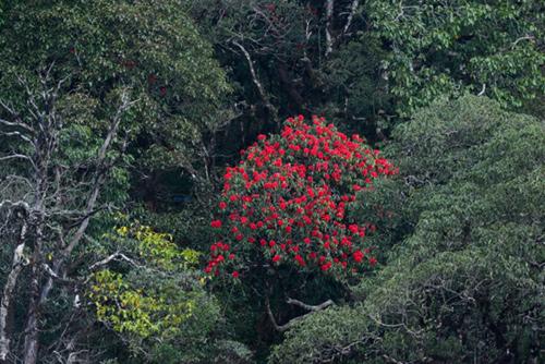 Tháng 4 về rồi, lên Sa Pa ngắm hoa đỗ quyên thôi - 3