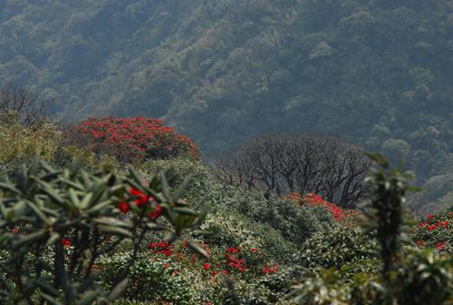 Tháng 4 về rồi, lên Sa Pa ngắm hoa đỗ quyên thôi - 2