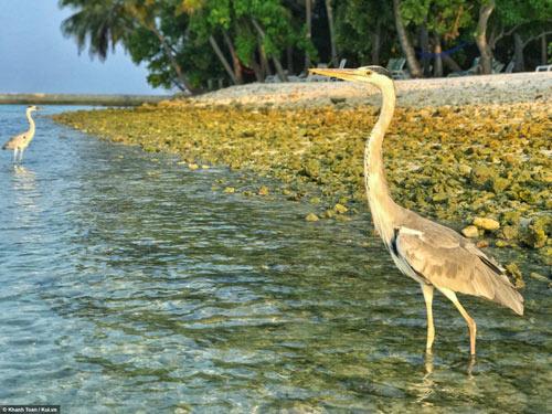 """""""Bỏ túi"""" ngay bí kíp du lịch Maldives giá rẻ - 5"""