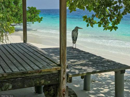 """""""Bỏ túi"""" ngay bí kíp du lịch Maldives giá rẻ - 7"""