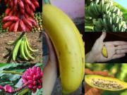 """Thị trường - Tiêu dùng - SIÊU LẠ: Top 7 giống chuối """"chất nhất hành tinh"""""""