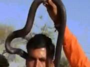 Ấn Độ: Xem biểu diễn rắn hổ mang, du khách chết thảm