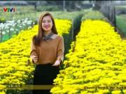 """"""" Vương quốc """"  hoa cúc vàng đẹp mê hồn ở Nam Định"""