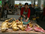 Thế giới - Nơi đầu tiên châu Á cấm ăn thịt chó